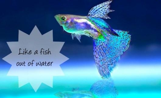 fish-2358741_1280